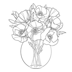 Vector bouquet with outline Poppy flower in the round transparent vase isolated on white. Ornate floral in contour style with poppy for summer design and coloring book. Symbol of Remembrance Day.
