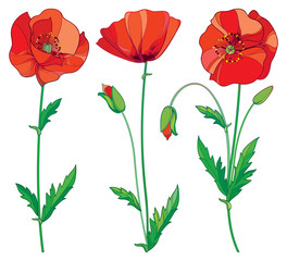 Vector set with outline red Poppy flower, bud and green leaves isolated on white background. Floral elements in contour style with poppy for summer design. Symbol of Remembrance Day.