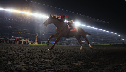Rosario, riding Animal Kingdom of the U.S., races to the finish line to win the ninth and final race of the Dubai World Cup at the Meydan Racecourse in Dubai
