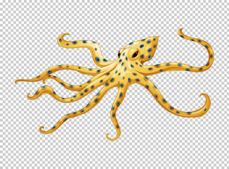 Octopus on transparent background