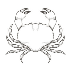 Crab drawing on white background. Hand drawn outline seafood illustration.