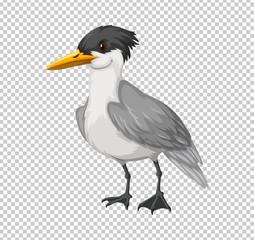 Wild bird on transparent background