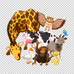 Many wild animals on transparent background