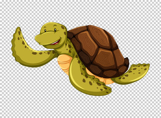 Sea turtle on transparent background