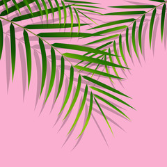 Exotic tropical palm leaves. Botanical leaves on millenial pink background. Exotic background