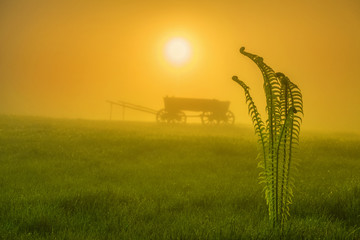 green bush of fern and rustic cart in the morning mist in the warm yellow light of the rising sun