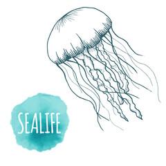 Hand drawn sketch isolated jellyfish, marine animals