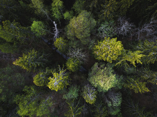 Aerial view of green forest straight above