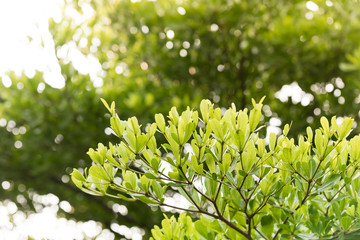 Beautiful green leaves.
