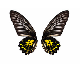 Butterfly wings, Isolated on white background