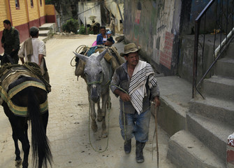 A Colombian gold prospector leads a donkey along a street in Marmato province, Caldas