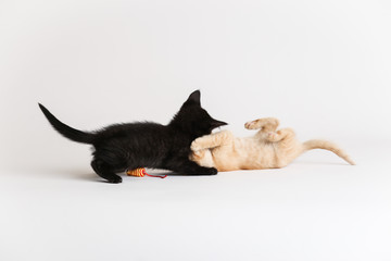 Kittens wrestle each other and play with a cat toy