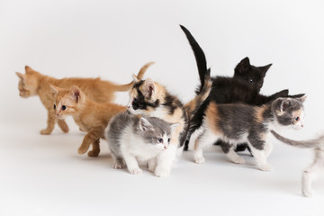 Batch of colorful kittens play together on an isolated white background
