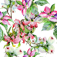 Wildflower dogwood flower pattern in a watercolor style isolated.