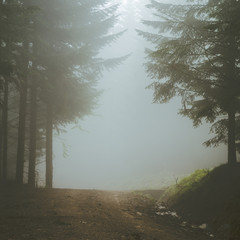 Foggy path in the forest