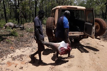 Australian Aboriginal Norman Daymirringu and friend James Gengi load the leg of a buffalo, which they intend to cook, into their vehicle after they discovered it dead on the side of a dirt track on the outskirts of Ramingining in East Arnhem Land
