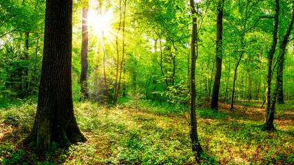 Fototapeten Wald Sonnenaufgang im Wald