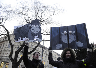 Protesters hold up pictures depicting a gorilla in jail during a protest rally at SNP Square in Bratislava
