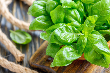 Green basil leaves closeup.