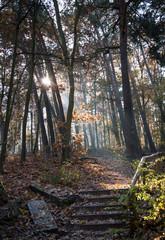 Sunbeams in the forest in Grunewald, Havelhöhenweg, Berlin