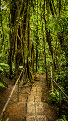 Cloud Forest Trail