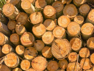 Fire wood eucalyptus texture - pattern