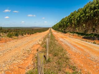 Devastated land in eucalyptus plantation in Brazil