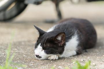 リラックスして寝る猫