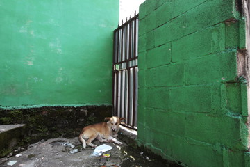 A dog sleeps by his owner's house after residents fled the Amaya Community, due to threats from suspected gang members, in San Salvador