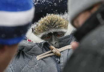 Monkey used to to be photographed with tourists, wears thick coat to protect it from cold in central Kiev