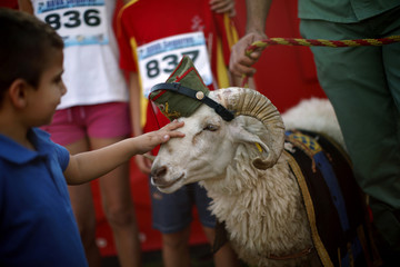 "child pets a ram, the mascot of the Spanish Legion, named ""Joselito"", before the start of the XVII 101km competition in Ronda"