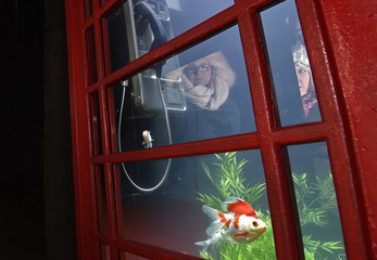 """Fish swim in water inside a modified traditional British telehone box in an art piece entitled """"Aquarium"""" as part of the """"Lumiere"""" festival in London"""