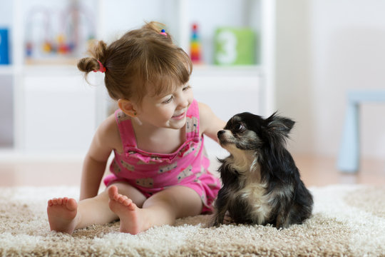Child girl with little dog black hairy chihuahua doggy