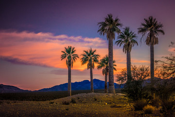 Sunset and Palmtrees, Coyote Springs Nevada