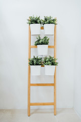 Plant stand with 5 plant pots, bamboo, white.A decorative ladder plant stand to grow several plants together vertically..Interior design, room decoration, bathroom,