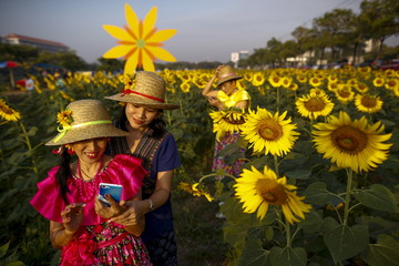 "Participants take a ""selfie"" at a sunflower field in Bangkok"
