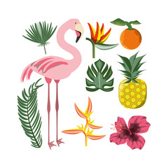 beautiful set icon with exotic flamingo and tropical elements, vector illustration