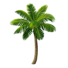 A coconut palm (a coconut tree) isolated on white background. Vector illustration.