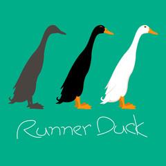runner duck vector illustration style Flat side profile
