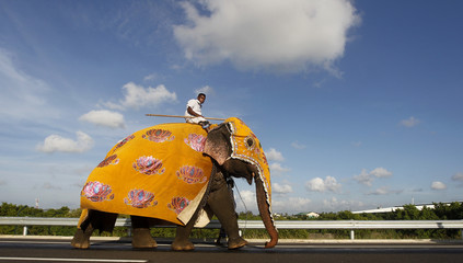 A mahout rides his elephant during a ceremony on the newly built highway to the Bandaranaike International Airport in Katunyake
