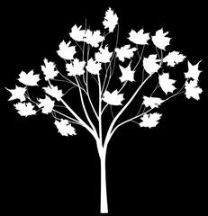 tree with large white leaves silhouette isolated on black
