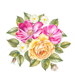 Watercolor illustration of rose flower.