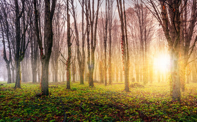 trees on meadow at foggy sunrise