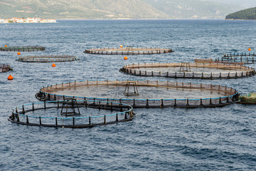 Fish farming in the sea