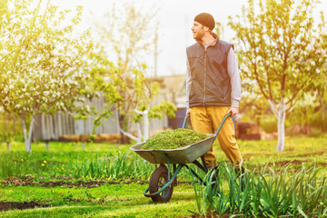 Male gardener is pushing wheelbarrow at spring green garden background.
