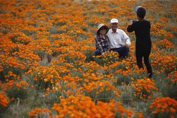 Francis Yang, 73, and her husband Mike Yang, 76, pose for a photo amongst California poppies in bloom in Lancaster