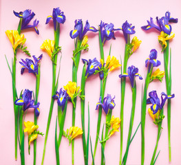 colorful bright yellow flowers on a pink background