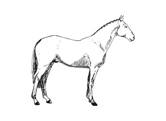 Vintage horse on white background