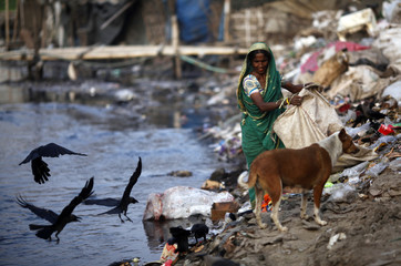 A woman collects garbages from a dump yard near a tannery at Hazaribagh along the polluted Buriganga river in Dhaka