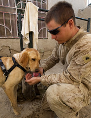 Wiese provides water to his sniffer dog at the Patrol Base Montana in Helmand province